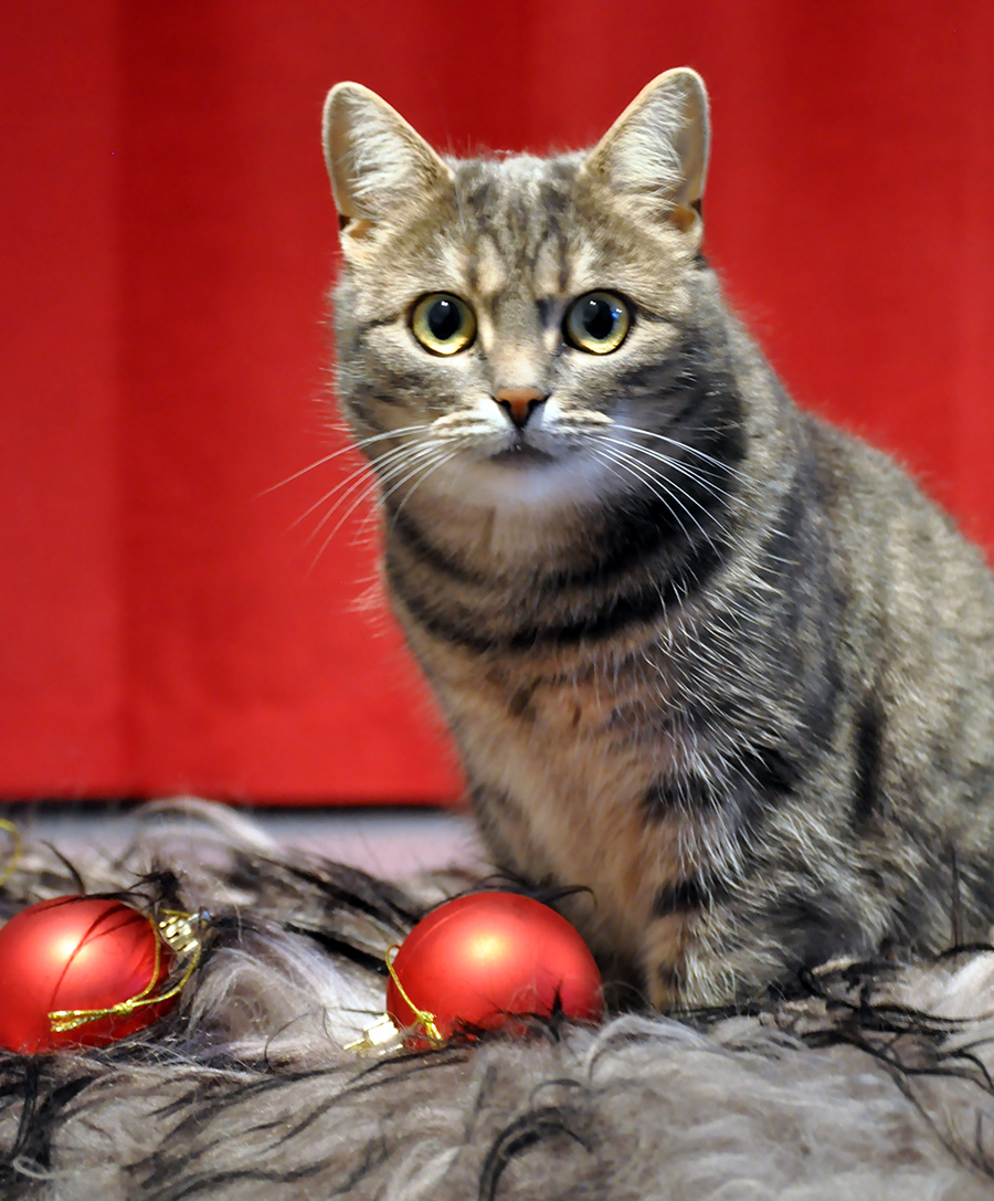 Joulua pukkaa – ja lomatiedotetta!